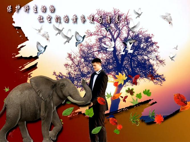 幻影图像:教学视频创意教程 8:制作保护动物宣传海报